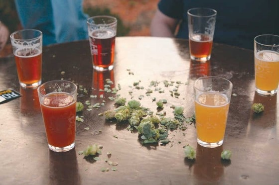 Fresh hops and beer